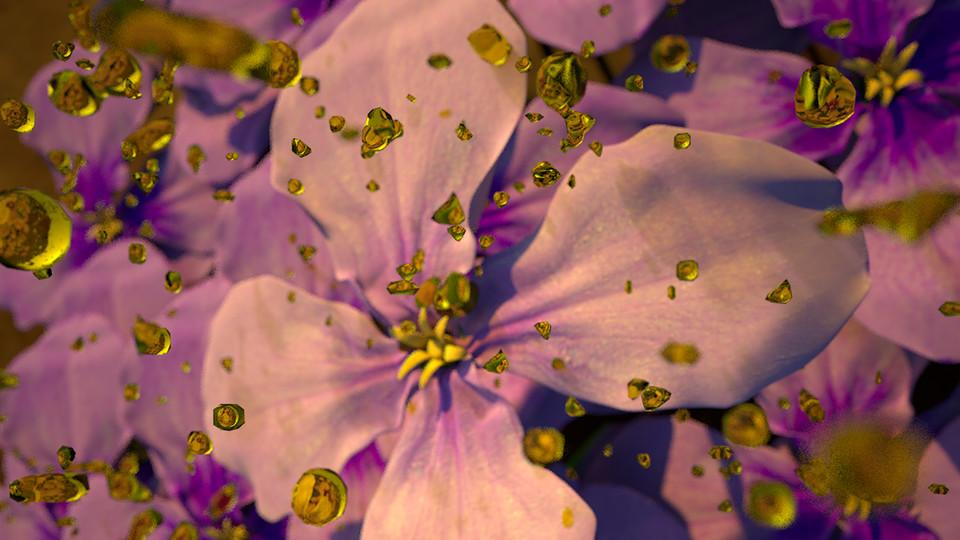 photo of oil droplets floating in front of a Chinese violet cress plant
