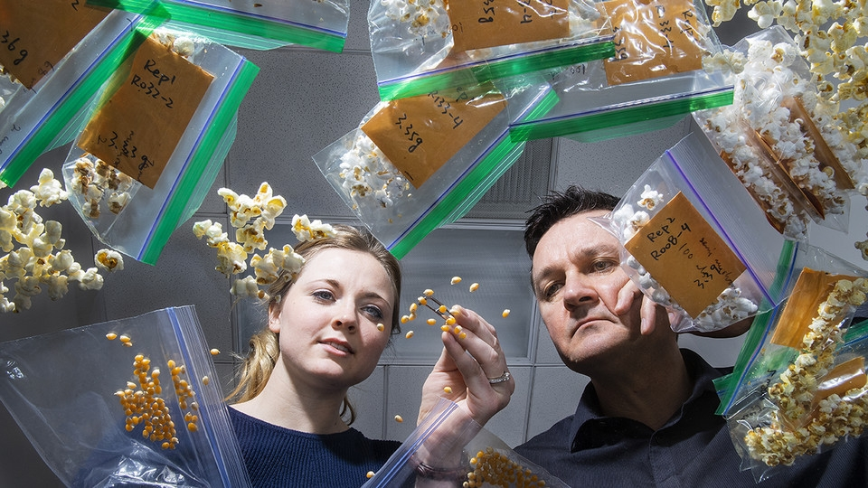 Nebraska's David Holding (right) and Leandra Marshall (left) are developing lines of popcorn featuring higher levels of lysine, an amino acid essential to the diets of humans and some livestock.